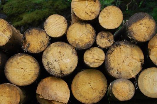 Zvýšené popularitě biomasy má nahrávat i nucená těžba dřeva způsobena kalamitou kůrovce.