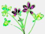 Příjem jedovatého kovu kadmia rostlinou bobu. Umělé barvy, nejvyšší obsah kovu značí fialová a černá. Kadmium se nejvíce hromadí v mladých listech. Foto doktor Petr Soudek.